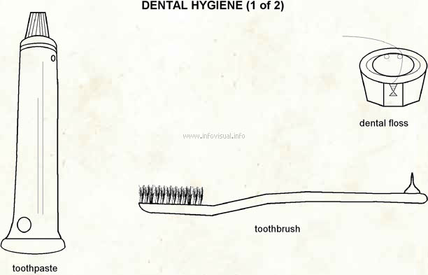 Dental hygiene  (Visual Dictionary)